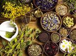 توسعه گیاه داروئی در شهرستان ارزوئیه در مسیر رونق تولید