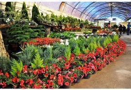 428 هزار گلدان گل از نوشهر به خارج از کشور صادر شد