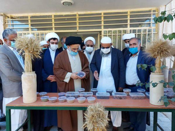 تولید ٢٠ هزار اصله نهال موز در ایستگاه تحقیقات کشاورزی بلوچستان