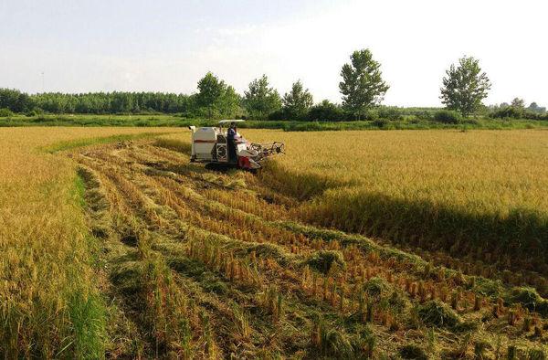 کشاورزی گیلان حال خوشی ندارد
