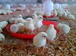 برگزاری کلاس آموزشی آنفلوانزای فوق حاد پرندگان در بخش چترود