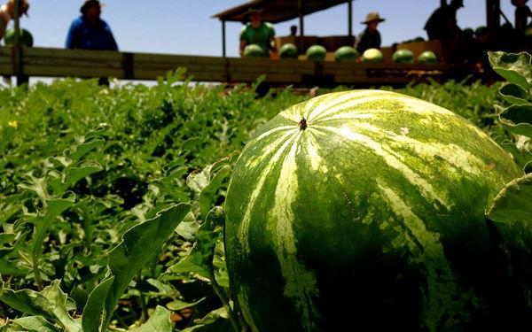 کمبود آب ، کشت هندوانه و امنیت مرزی