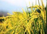 پیامدهای اتخاذ سیاستهای نامناسب در دوران کرونا بر امنیت غذایی میلیاردها نفر در منطقه