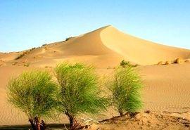 26 میلیون هکتار از مناطق بیابانی کشور تحت تاثیر فرسایش بادی قرار دارد