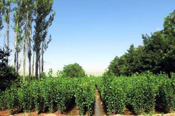 تولید 10میلیون اصله نهال در آذربایجان غربی در سال جاری