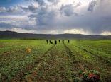همکاری با ایران برای افزایش بهرهوری و کاهش برداشت آب در دشت قزوین
