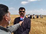 برنامهریزی برای اختصاص  ۱۰ درصد زمینهای دیم به کشت علوفه در تناوب با غلات