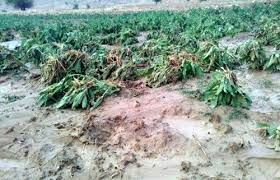 اعطای تسهیلات به خسارت دیدگان سیل 98 شهرستان بجنورد