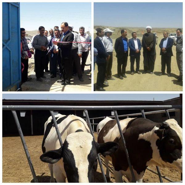 افتتاح یک واحد گاوداری به نمایندگی از ۵ واحد دامداری فردوس