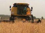 برداشت دانه روغنی کلزا ازسطح ۷۰ هکتار از مزارع خانمیرزا