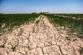 خشکسالی مزارع دیم رستم را تهدید میکند