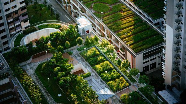 کشاورزی در آپارتمان٬ راهحل مبارزه با بحرانهای اقلیمی