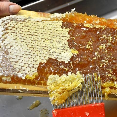 تحقق افزایش تولید عسل در فیروزآباد