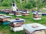 حق تقدم زنبورداری با بومیهاست!