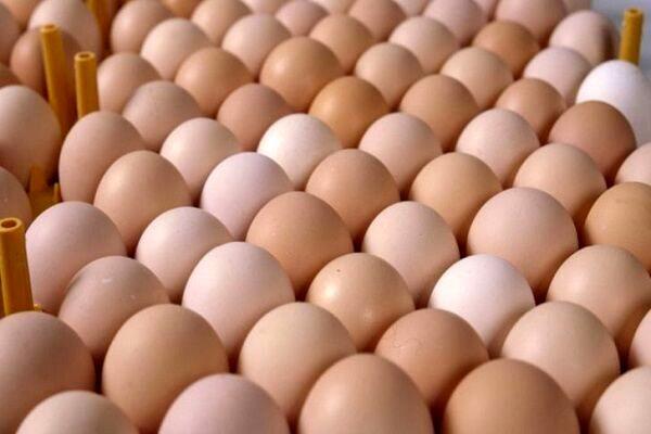 آینده مبهم بازار تخم مرغ اصفهان در انتظار تصمیم ستاد تنظیم بازار کشور