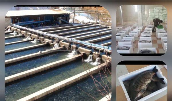 افزایش صادرات آبزیان خوراکی از استان اصفهان