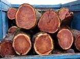 کشف ۱۰ تن چوب جنگلی در اردل