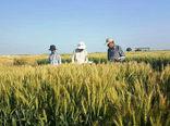 جهاد کشاورزی خوزستان میزبان اعضاء مرکز بینالمللی سیمیت بود