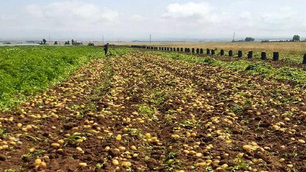 حمایت از بخش خصوصی برای افزایش بهرهوری حوزه کشاورزی