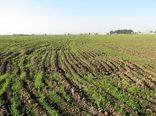 بیش از یک میلیون از اراضی کشاوزری ایلام پایش شد