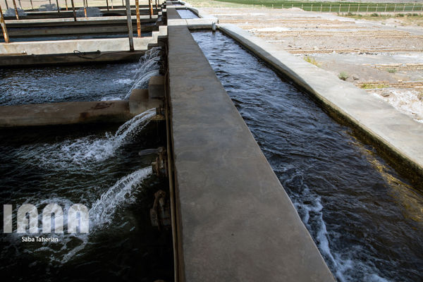 پرورش ماهی در دریا راهکار افزایش تولید آبزیان در ایران است