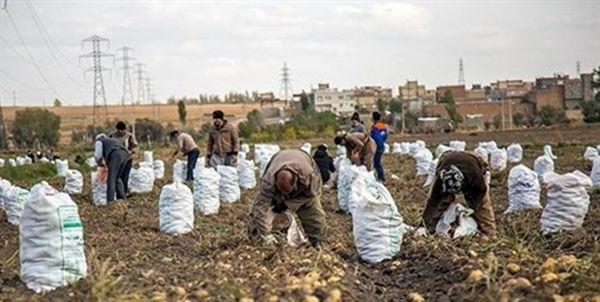 نبود صنایع تبدیلی مهمترین مشکل سیبزمینیکاران قروهای