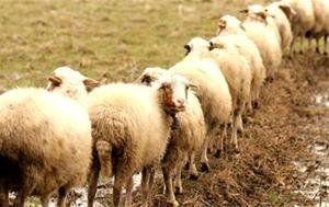 ذخیرهسازی ۱۰۰ تن گوشت قرمز در خراسان شمالی