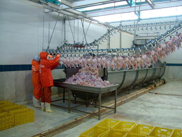 توزیع گوشت مرغ تنظیم بازاری در زاهدان آغازشد