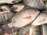 جهش تولید و صرفه پرورش ماهی تیلاپیا در بافق