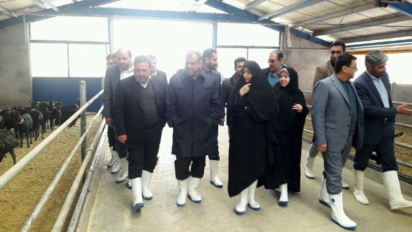 بازدید استاندار و رئیس سازمان جهاد کشاورزی قزوین از بزرگترین مرکز پرورش بز مورسیا در کشور