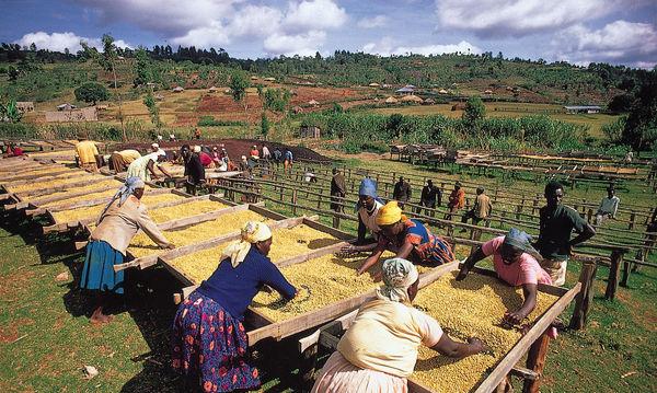 کشاورزی چگونه پای توریستها را به کنیا باز کرده است؟