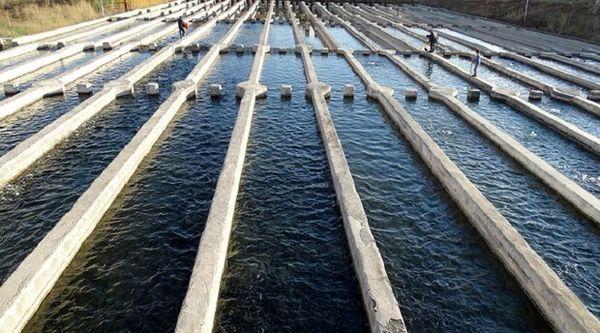 عدم وجود کانون آلوده به ویروس VHS ،  IPN و IHN  در مزارع پرورش ماهی خراسان شمالی