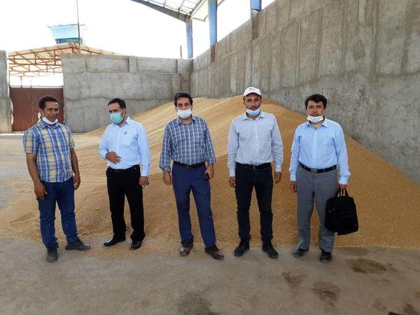 بازدید کمیته پایش بذر استان قزوین از شرکتهای پیمانکار تولید کننده بذر استان