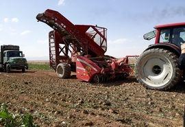 پیش بینی تولید 182هزار تن چغندر قند در شهرستان اقلید