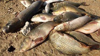 صیادی از دریاچه سد سلمان فارسی قیروکارزین آغاز شد