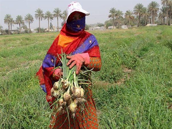 ۱۵۲ پروژه در بخش کشاورزی هرمزگان به بهرهبرداری میرسد