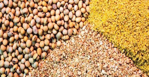 خوراک دام با نرخ دولتی برای دامپروری ها