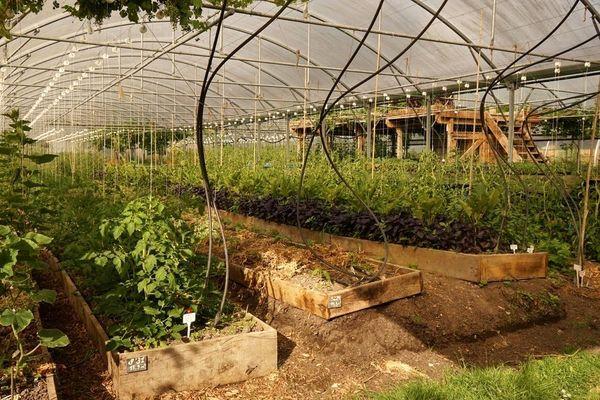 جنبش تولید محصولات کشاورزی ارگانیک در مالاوی