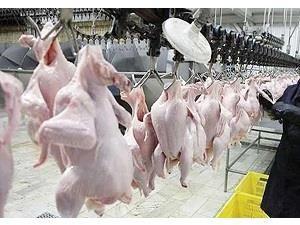 توزیع روزانه 25 تن گوشت مرغ در آمل