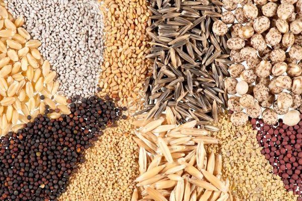 توسعه کشت با بذر اصلاح شده، راهی برای بهره برداری بهینه از آب وخاک است