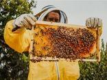 تولید سالانه ۲۴تن عسل در شهرستان کاشان