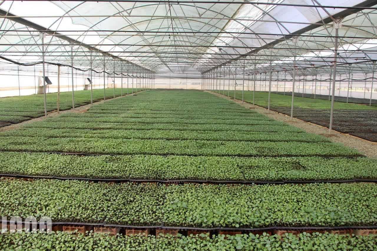 بازدید معاون امور باغبانی وزیر جهاد کشاورزی از پروژه های کشاورزی شهرستان پیشوا