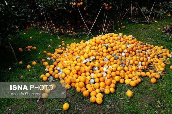 بیکیفیتی بزرگترین چالش میوههای پاییزی