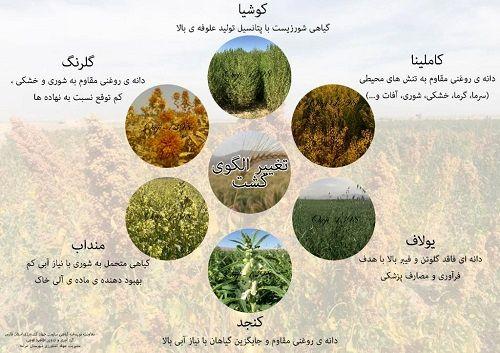 گیاهان جدید در کارگاه آموزشی زرقان معرفی شدند