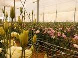 افتتاح 2 طرح گلخانه ای در بیضاء