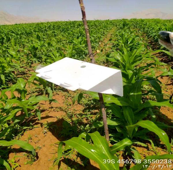 ردیابی آفت قرنطینه ای کرم برگخوار پاییزه در 30 هکتار از مزارع ذرت شهرستان اردل