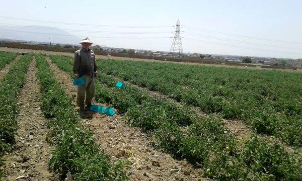 لزوم ارائه آموزش به کشاورزان برای تولید محصول ارگانیک و استاندارد
