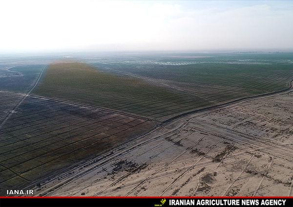 5000 هکتار درختکاری برای مقابله با گرد و غبار خوزستان