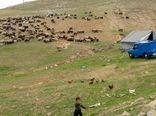۶۵ درصد جمعیت دامی ایلام متعلق به عشایر است