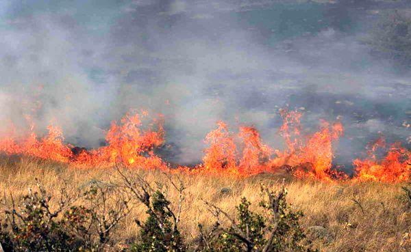 پارک ملی گلستان در آتش